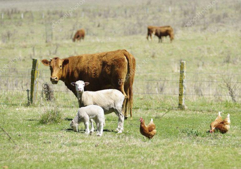 Все меньше запорожцев занимается животноводством