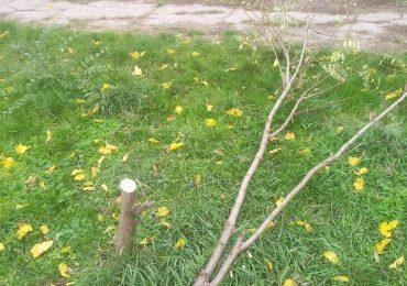 В парке Яланского вновь уничтожили деревья