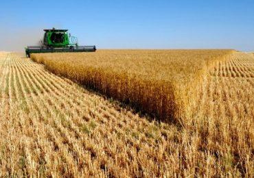 Урожайность зерна и овощей в этом году упала