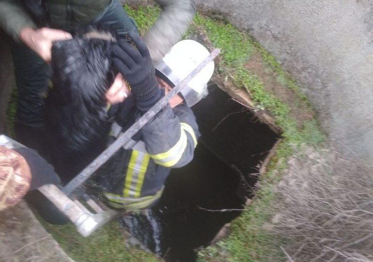 На Запоріжжі рятувальники витягли з колодязя двох собак