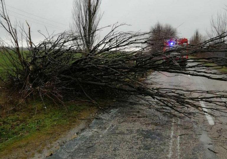 У Запоріжжі рятувальники очистили трасу від дерева, що впало