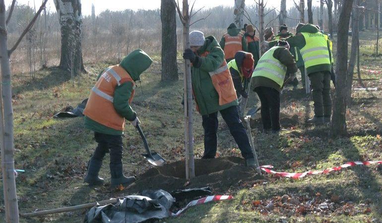 В Запорожье высадили новые деревья