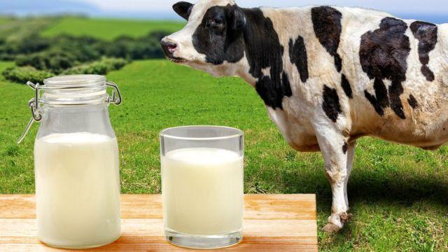 В запорожских магазинах молоко подорожает еще больше