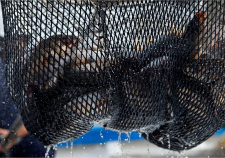До Каховського водосховища повернено понад сто кілограм риби
