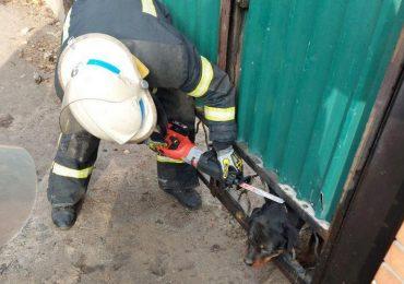 У Мелітополі пес застряг у хвіртці