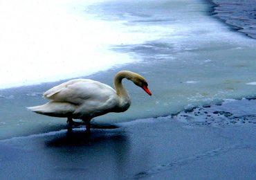 Кто и как зимует в Запорожье (фото, видео)