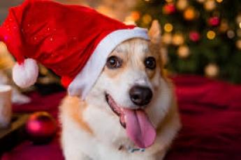 В собачьем приюте в Мелитополе провели свой новогодний утренник