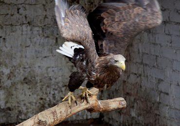 Зоопарк на запорожской ДЖД: животные сыты и здоровы…